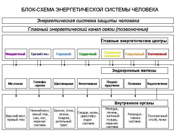 Блок-схема энергетической системы человека.